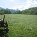 Wiesen im Mai 2012